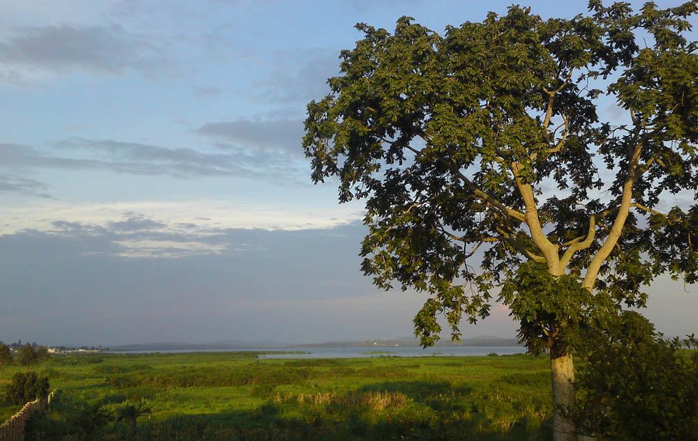 wetlands below Bukasa Muyenga Kampala